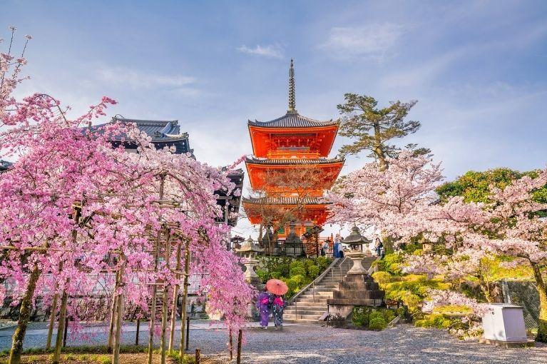 Japão<br>Especial Sakura