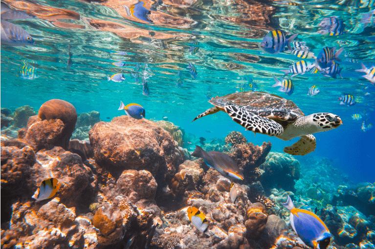Maldivas | Ari Atoll