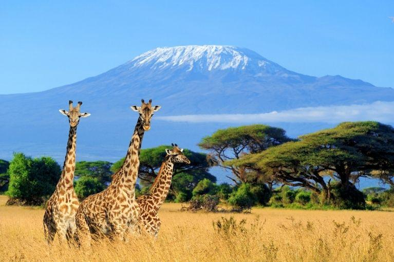 Safari Kongoni