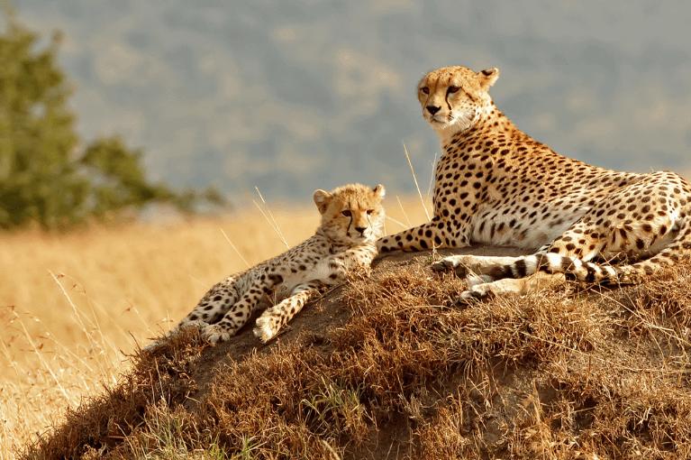 Quénia<br>Lua de Mal Selvagem
