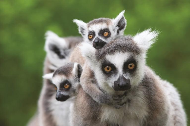 Madagáscar<br>e Maurícias